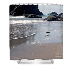 Beachcomber Shower Curtain by Sharon Elliott