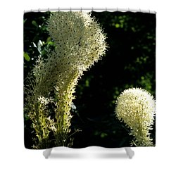 Bear-grass I Shower Curtain by Sharon Elliott