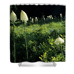 Bear-grass II Shower Curtain by Sharon Elliott
