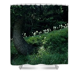 Bear-grass Ridge II Shower Curtain by Sharon Elliott