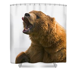 Bear With Tongue Out Of Mouth Shower Curtain by Carson Ganci