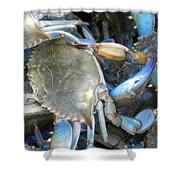 Beaufort Blue Crabs Shower Curtain by Patricia Greer