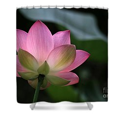 Beautiful Backlit Lotus Shower Curtain by Sabrina L Ryan