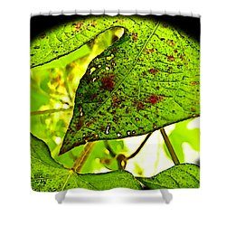 Shower Curtain featuring the digital art Beautiful Deday by Debbie Portwood