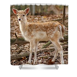 Shower Curtain featuring the photograph Beautiful Fawn by Jean Haynes