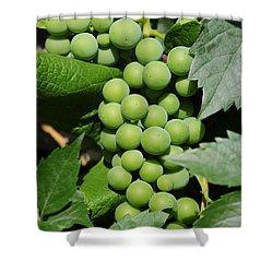 Beautiful Grapes Shower Curtain by Carol Groenen