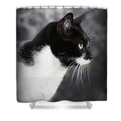 Beautiful Kitty Shower Curtain by Paul  Wilford