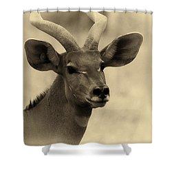 Beautiful Nyala Shower Curtain