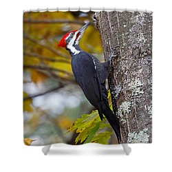 Beautiful Pileated Woodpecker Shower Curtain