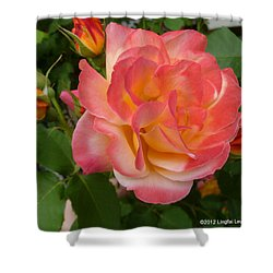 Shower Curtain featuring the photograph Beautiful Rose With Buds by Lingfai Leung