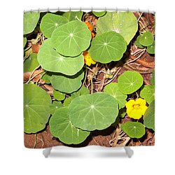 Beautiful Round Green Leaves Of A Plant With Orange Flowers Shower Curtain