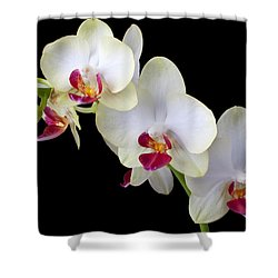 Beautiful White Orchids Shower Curtain by Garry Gay