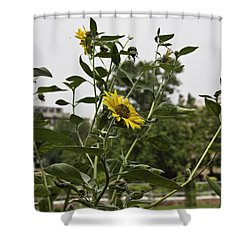 Beautiful Yellow Flower In A Garden Shower Curtain by Ashish Agarwal