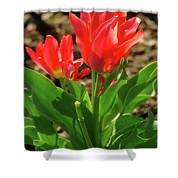 Shower Curtain featuring the photograph Beauty In Red by Dariusz Gudowicz
