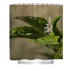 Beauty Of A Wildflower Shower Curtain by Deborah Benoit