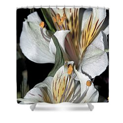 Shower Curtain featuring the photograph Beauty Untold by Tikvah's Hope