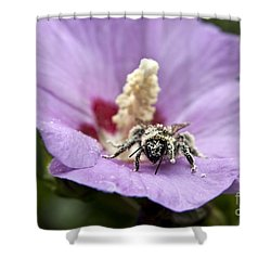 Shower Curtain featuring the photograph Bee Covered In Pollen  by Jeannette Hunt