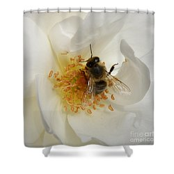 Bee In A White Rose Shower Curtain by Lainie Wrightson