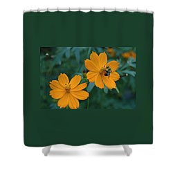 Bee On Cosmos Flower  Shower Curtain by Tom Wurl
