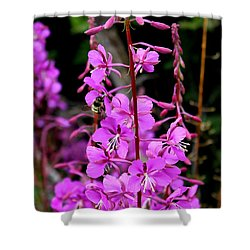 Shower Curtain featuring the photograph Bee On Fireweed In Alaska by Kathy  White