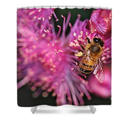 Bee On Lollypop Blossom Shower Curtain by Kaye Menner