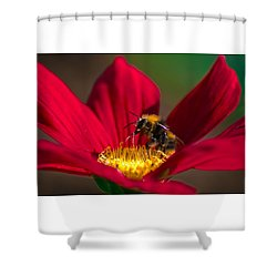 Shower Curtain featuring the photograph Beebot by Stwayne Keubrick
