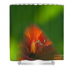 Belladonna Lily Closeup Shower Curtain by Heiko Koehrer-Wagner