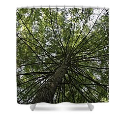 Beneath Tree Shower Curtain