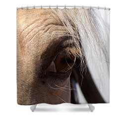Benson Mule Days Shower Curtain by Travis Truelove