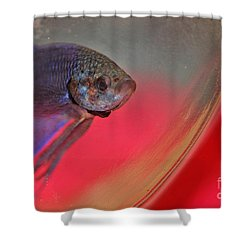 Beta Shower Curtain by Joann Vitali