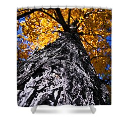 Big Autumn Tree In Fall Park Shower Curtain by Elena Elisseeva