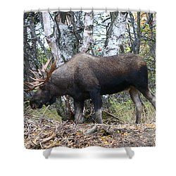 Shower Curtain featuring the photograph Big Body by Doug Lloyd