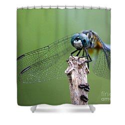 Big Eyes Blue Dragonfly Shower Curtain by Sabrina L Ryan
