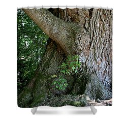 Big Fat Tree Trunk Shower Curtain