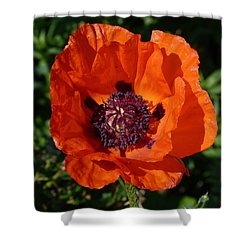 Shower Curtain featuring the photograph Big Red Poppy by Lynn Bolt