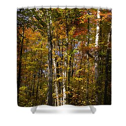 Birch Trail Shower Curtain by Jo-Anne Gazo-McKim