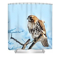 Bird - Red Tail Hawk - Endangered Animal Shower Curtain by Paul Ward