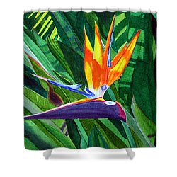 Bird-of-paradise Shower Curtain by Mike Robles