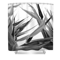 Bird Of Paradise  Shower Curtain by Sumit Mehndiratta
