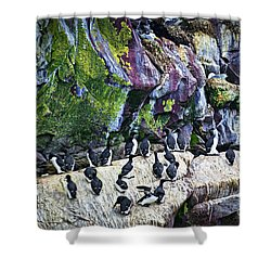 Birds At Cape St. Mary's Bird Sanctuary In Newfoundland Shower Curtain by Elena Elisseeva