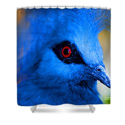 Bird's Eye View Shower Curtain by Tap On Photo