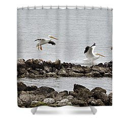 Birds Of A Feather... Shower Curtain