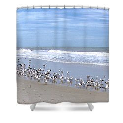 Birds On A Beach Shower Curtain