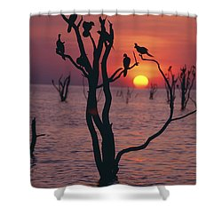 Birds On Tree, Lake Kariba At Sunset Shower Curtain by Axiom Photographic