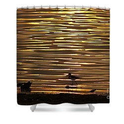 Shower Curtain featuring the photograph Birds Walking In Gold Water Waves by John  Kolenberg