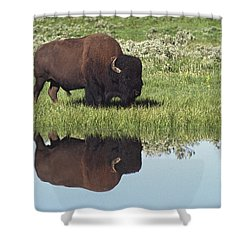 Bison Bison Bison On Grassy Meadow With Shower Curtain by David Ponton