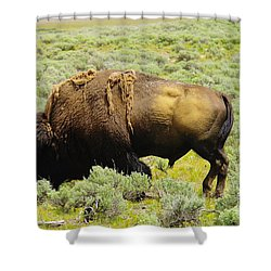 Bison Shower Curtain by Jeff Swan