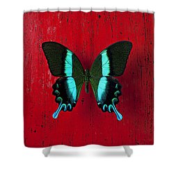 Black And Blue Butterfly  Shower Curtain by Garry Gay