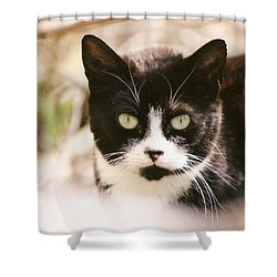 Shower Curtain featuring the photograph Black And White Feral Cat by Chriss Pagani