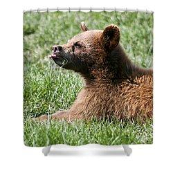 Black Bear Cub I Shower Curtain